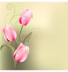 Light green background with tulips vector