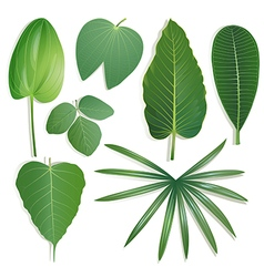 Different shape of leaves set 2 vector