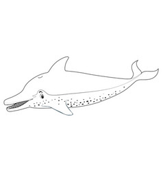 animal outline for dolphin vector image vector image