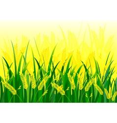 Rice field vector