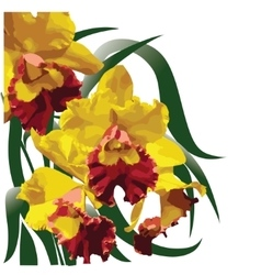 Yellow-red flowering orchid vector image vector image