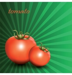 Red fresh tomatoes on green background vector