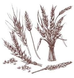 Hand drawn wheat ears decorative icons set vector