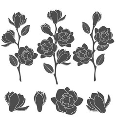 with flowering magnolia branches vector image