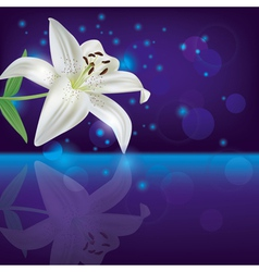 Lily background invitation or greeting card vector image