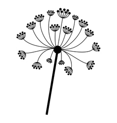 Silhouette dandelion with stem and pistil closeup vector