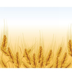 Wheat ears lawn vector