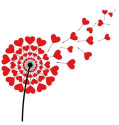 Dandelion fluff red heart shape on white vector