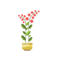 House plant indoor flower in pot elegant home vector