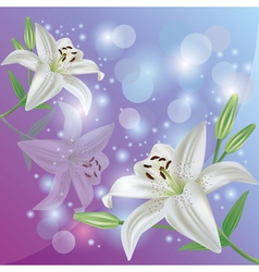 Lily flower background greeting or invitation card vector image