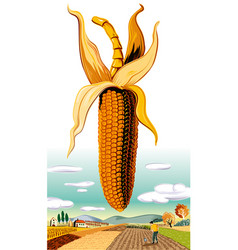 Cob of ripe corn vector