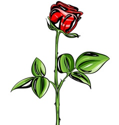drawing rose isolated on white background vector image