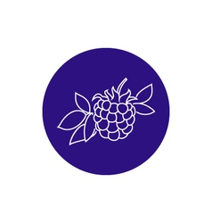 Icon blackberry in the contours vector