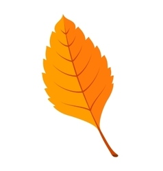 Autumn bright fall leaf vector