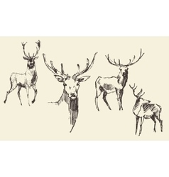 Set of deers engraving vintage hand drawn sketch vector