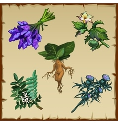 Set of different exotic flowers and mandrake vector