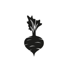 Beet on white background vector