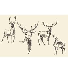 Set of deers engraving vintage hand drawn sketch vector image vector image