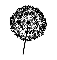 Contour dandelion with stem and pistil closeup vector
