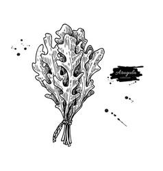 Arugula leaf bunch hand drawn vector