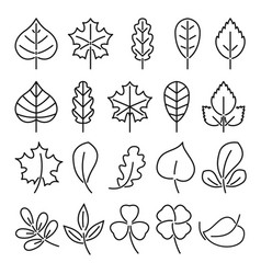 leaf icon set linear isolate vector image vector image
