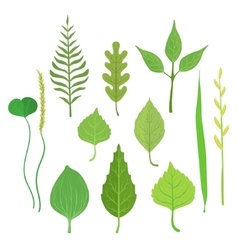 Trees and plants leaf collection vector