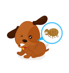 cute angry itchy dog scratches fleas off vector image vector image