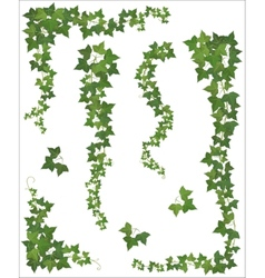 Hanging branches of ivy set vector
