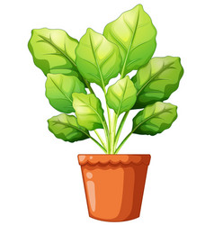 Green plant in clay pot vector