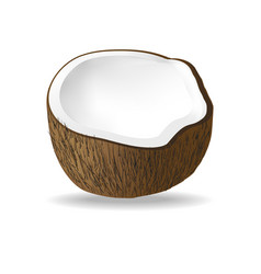 Half coconut isolated on white background vector
