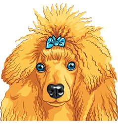 Poodle sketch vector image vector image