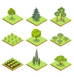 public park decorative trees isometric 3d set vector image