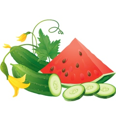 Watermelon and cucumber vector