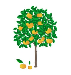 Tangerine tree vector