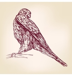 Hawk bird of prey - hand drawn llustration vector