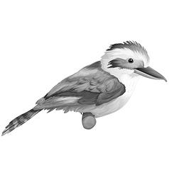 A kookaburra vector