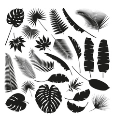 Black Tropical Leaves Collection isolate vector image