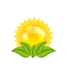 Abstract sun with green leaves isolated on white vector