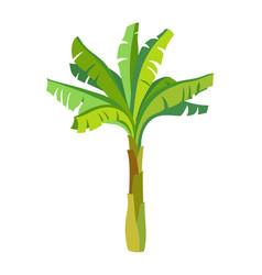 banana palm tree vector image