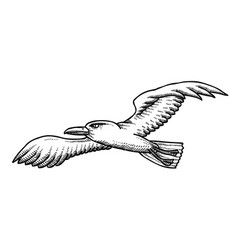 Cartoon image of seagull vector