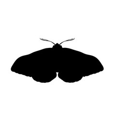 moth insect black silhouette animal vector image