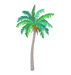Coconut palm tree vector