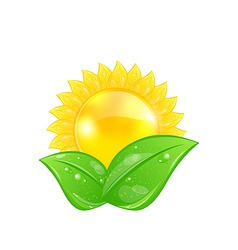 Eco friendly icon with sun and green leaves vector image
