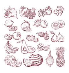 Sketch fruits for package design doodle vector