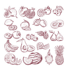 sketch fruits for package design doodle vector image vector image