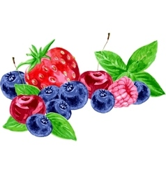 Watercolor berries vector