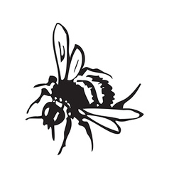 Engraving of honey flying bee isolated on white vector