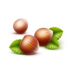 Full unpeeled hazelnuts with leaves close up vector