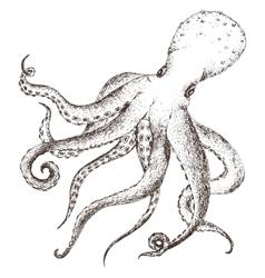 sea life octopus vector image