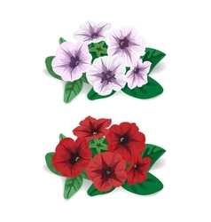 White and red flower bush petunia vector